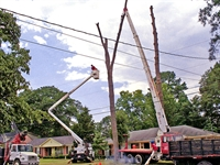 renowned tree service can - 1